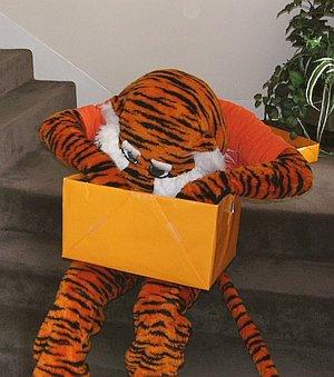 Aubie opening empty giftbox