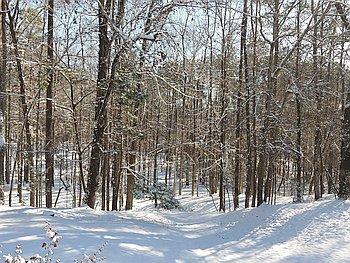Snowfall in Auburn January 17, 2018